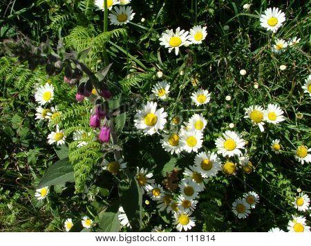 毛地黄和野生花卉两个。