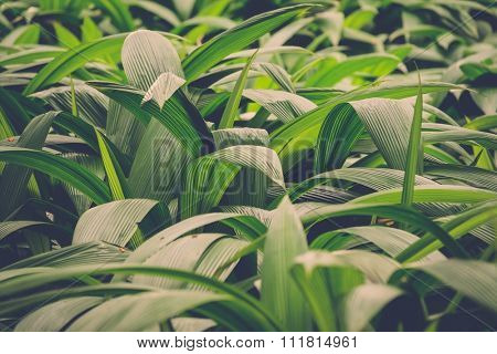 Lush green leaves in tropical jungle