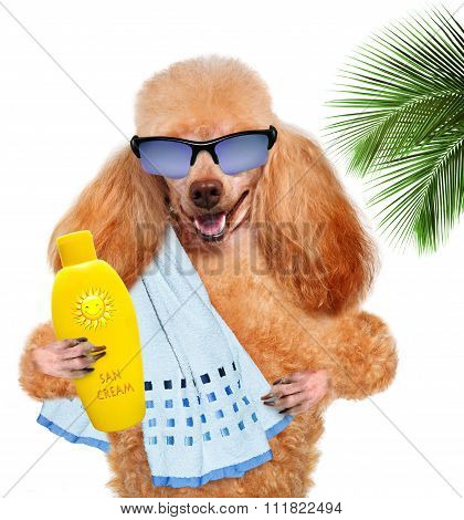 Dog with suntan lotion and a towel.