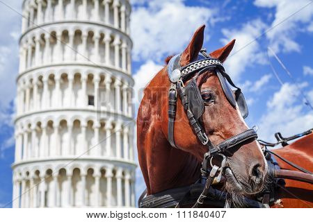 Horse And Leaning Tower Of Pisa .tuscany,italy