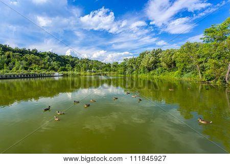 Scarborough Bluffs Pond. Toronto
