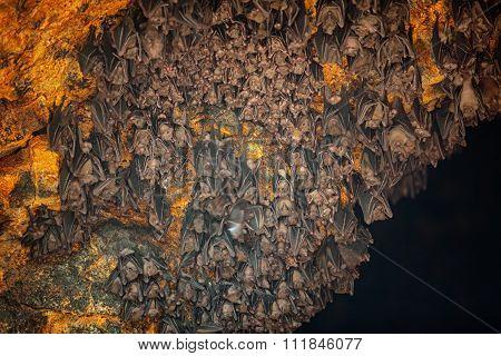 Colony Of Bats At Goa Lawah Bat Cave Temple In Bali