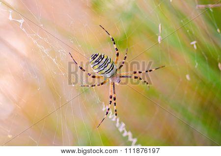 spider on the spiderweb