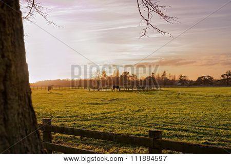 Horses In An Autumn Sunset