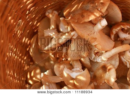 Basket With Eatable Mushrooms