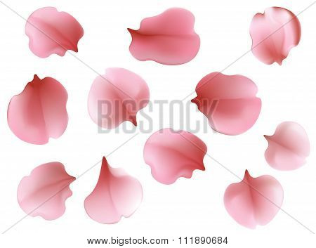 Beautiful Light Spring Background Seamless Pattern With Pink Flying Petals Of Sakura - Japanese Cher