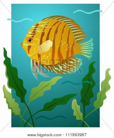 Fantasy Goldfish