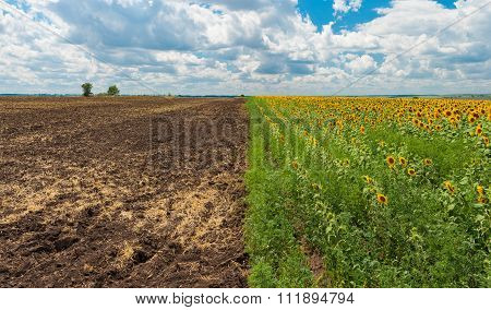 Landscape at summer season in central Ukraine