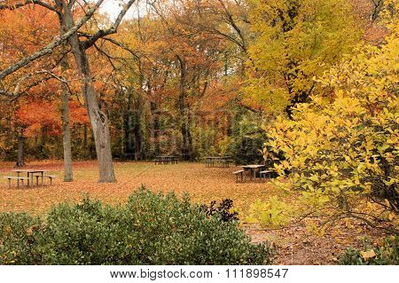 Picnic Park In Fall
