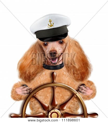 Dog sailor.