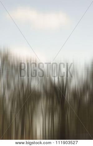 Blurred trees in water