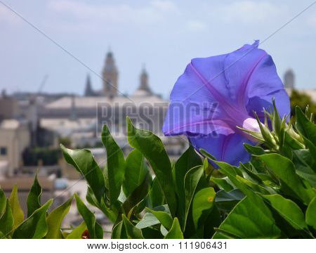 Violet Flower Wit The City In Background