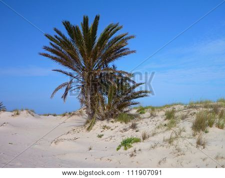 Palm Tree At The Sandy Beach