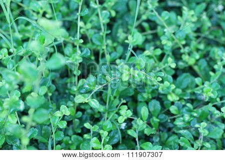 Small Tree Branches Adjacent Densely Beautiful Green Background