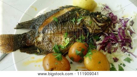 Fish Of The Apostle Peter