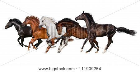 Horse herd isolated