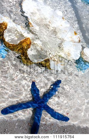 Blue starfish and pearl shell in the clear water.