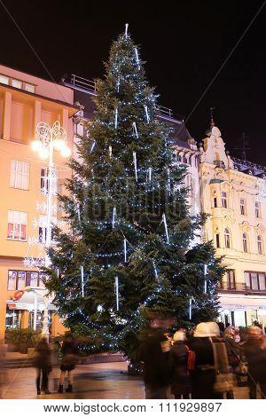 Christmas Tree On Jelacic Square