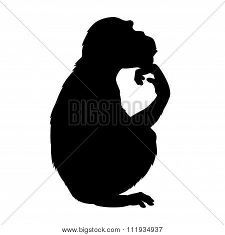 Silhouette Thinking Chimp