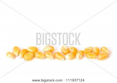 Close Up Yellow Grain Corn Isolated On White