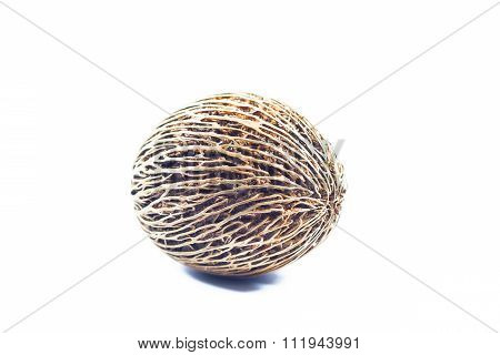 Cerbera Oddloam's Seed Isolated On White Background