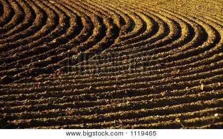 Furrows In A Field