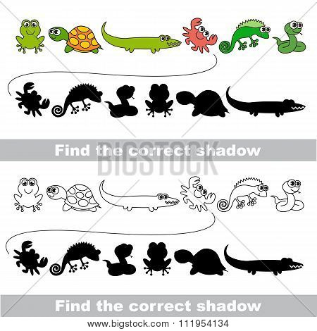 Amphibious set. Find correct shadow.