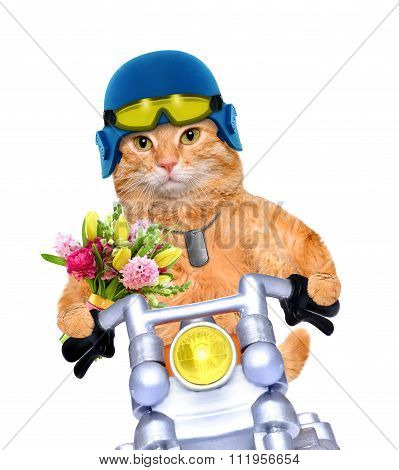 Motorcycle cat with flowers.