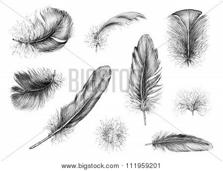 Hand Drawn Feathers.