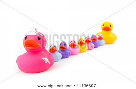 Mother rubber duck leading her children and daddy rubber duck in a single file; on white