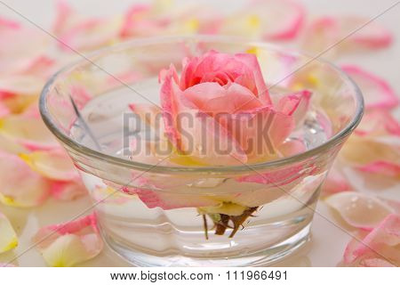 White Rose in a bowl of water and  petals.