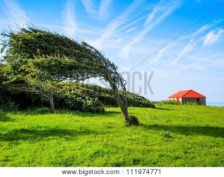 Single tree in windy day