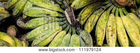 Unripe Cardava green and yellow Bananas for Sale at local market in Indonesia