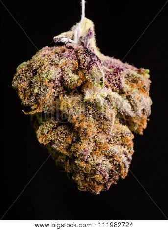 Twisted Purple Og 2