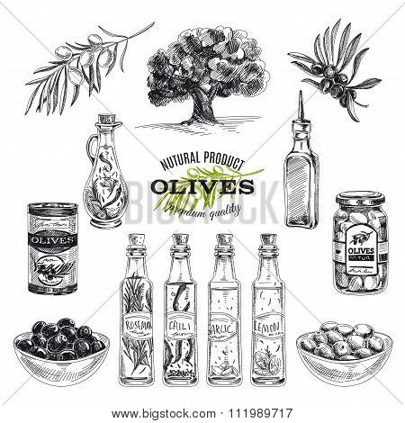 Vector hand drawn illustration with olives and olive oil.