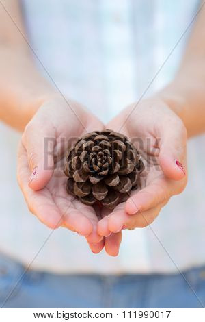 Hand With Pine Seed