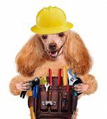Постер, плакат: Dog handyman