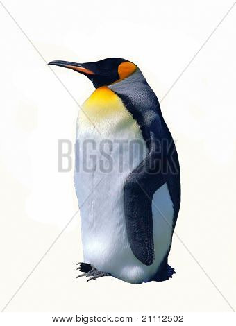 Isolated Emperor Penguin