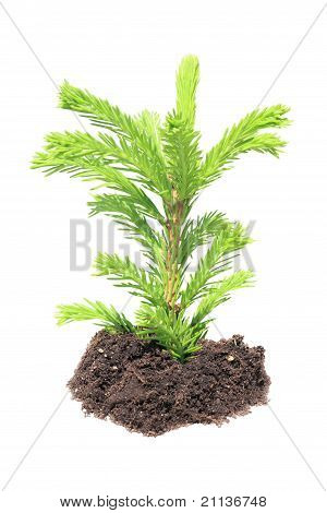 Green seedling isolated
