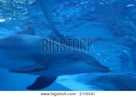 Dolphin Through Textured Glass