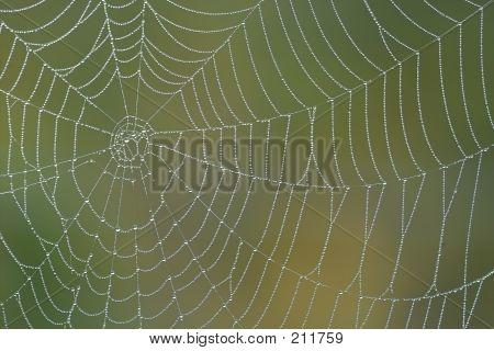 Ochtend Spiderweb