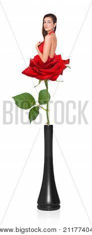Wonderful Rose In A Black Vase Isolated On White