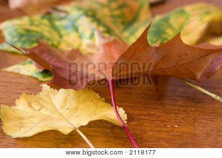 Leaves In The Early Autumn