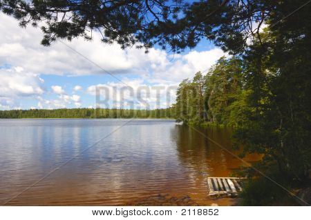 Lake In-Field. A Bright Summer Sun. White Clouds. Pine-Trees.