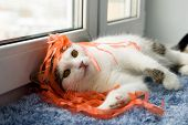 Funny White Tabby Cat Is Playing With Orange Ribbons Near To The Window. poster