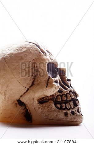 Closeup profile of a fake human skull on a white background