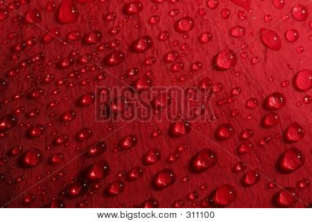 Rose Petal Droplets