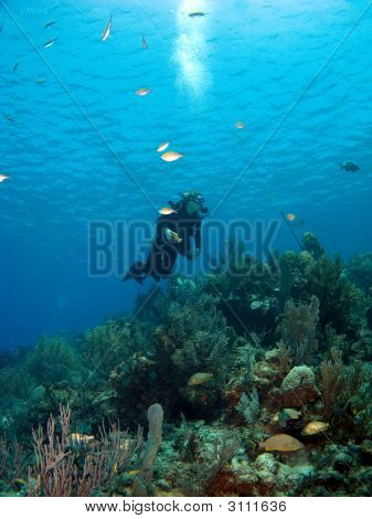 Scuba Diver Looking Upward In Cayman Brac