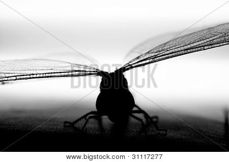Dragonfly in black