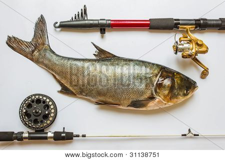 Fish With Rods And Tackle